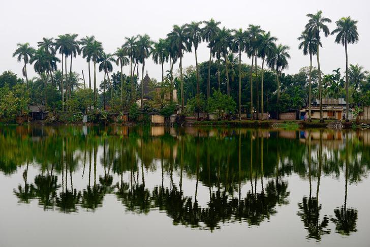 Фото №1 - В Бангладеш высадят миллион пальм для борьбы с молниями