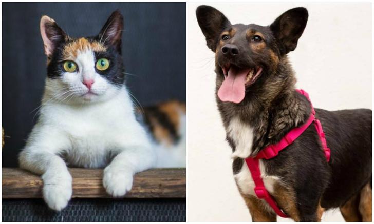 Фото №1 - Котопёс недели: кошка Осень и собака Кася ждут своих людей