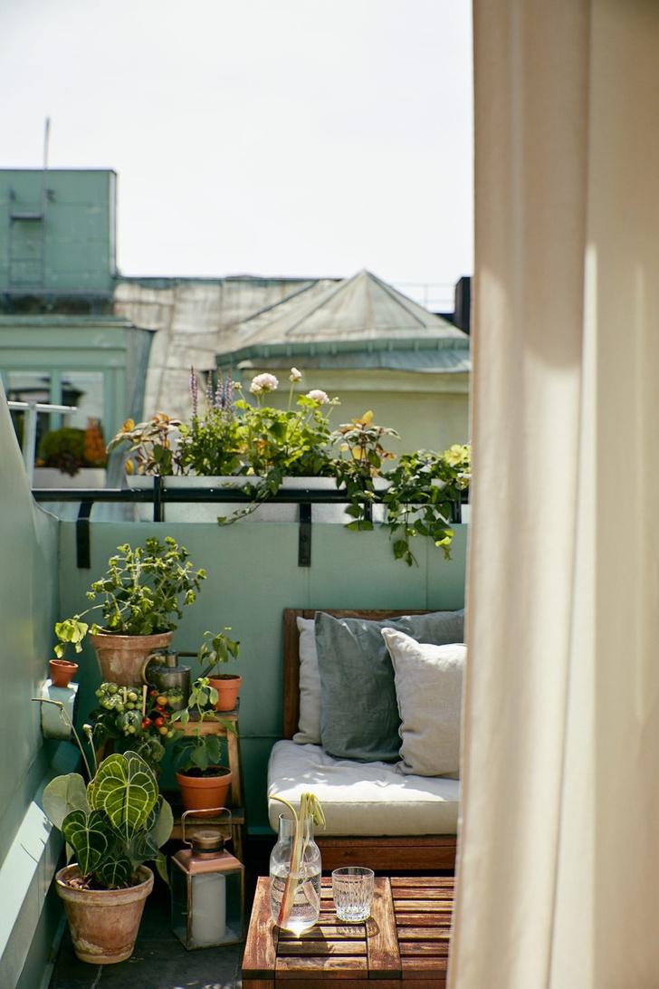 Фото №8 - Сад в миниатюре: советы начинающим садоводам