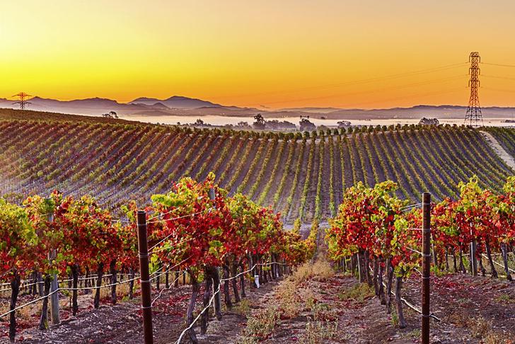 Фото №2 - Рекорды: Вино