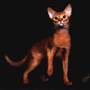 Фото №1 - Кошка поможет вылечить людей