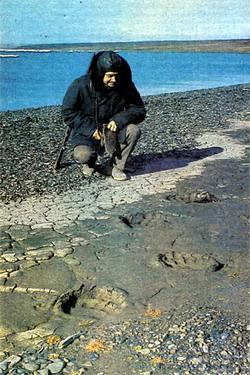 Фото №3 - Рядом с моржами