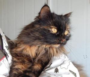 Фото №2 - Котопёс на карантине: кошка Елка и пес Марсель ждут своих хозяев
