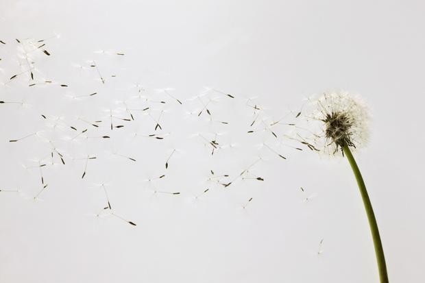 Фото №9 - Узнай, какой ты цветочек по дате рождения