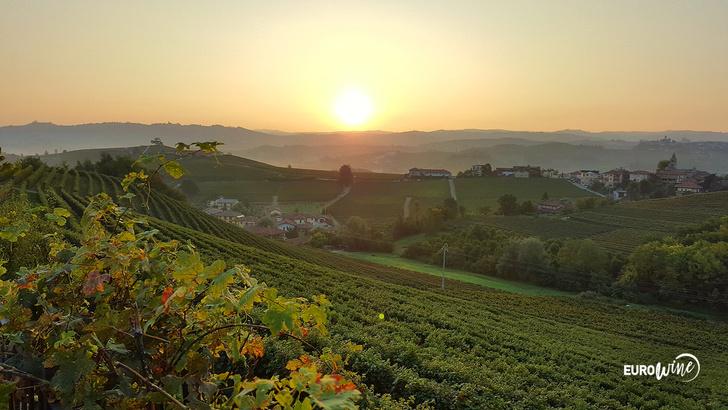 Фото №1 - Лозы у подножия гор: что нужно знать о Пьемонте и его главных винодельнях