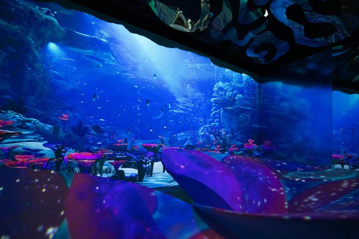 Фото №3 - «Океан юрского периода»: новая выставка о морских гигантах в «Москвариуме» на ВДНХ