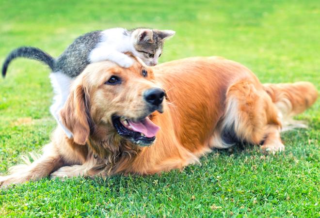 Фото №8 - 28 фактов о животных, которые поднимут настроение