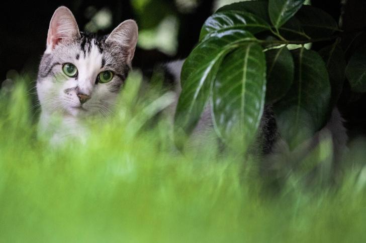 Фото №1 - Почему кошки едят траву