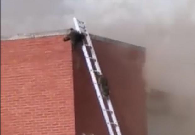 Фото №1 - Пожарные собрали большую лестницу для енотов, которые залезли на загоревшийся склад (видео)