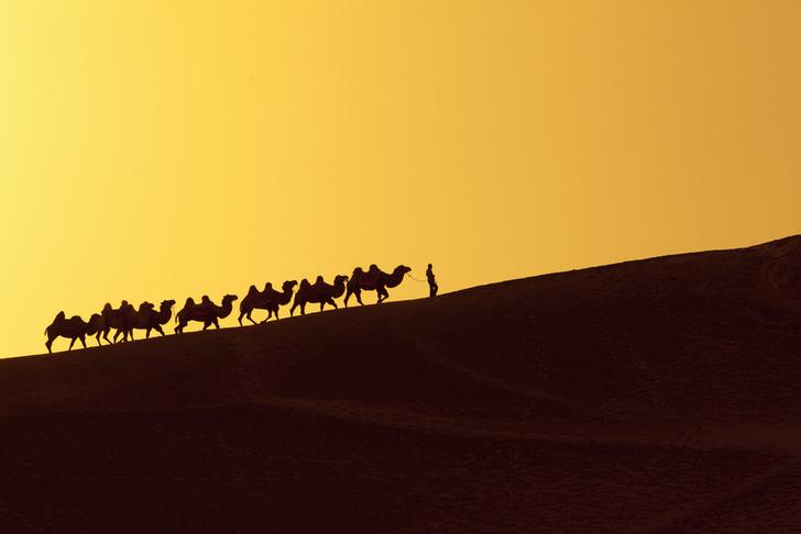 shutterstockПосле распада Монгольской империи в XIV–XV веках на Пути возникло множество враждующих государств, и передвижение по нему стало опасным. В то же время в Европе начало бурно развиваться мореходство. Одно судно перевозило столько же груза, сколько тысяча верблюдов, а морской путь вдоль Южной Азии занимал вдвое меньше времени, чем дорога по суше.
