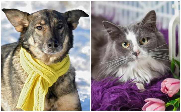 Фото №1 - Котопёс на карантине: кошка Анфиса и пес Лион