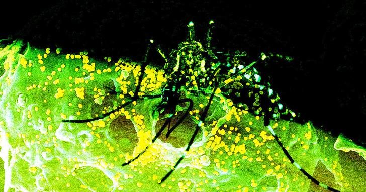 Фото №1 - В США обнаружен редкий смертельный вирус