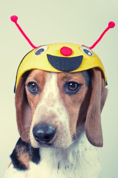 Фото №9 - Фотоподборка недели: собаки, которые уже готовы к Хэллоуину