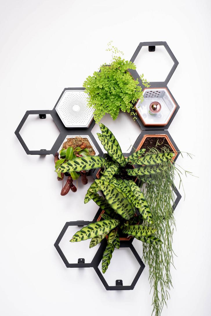 Фото №6 - Модульная зеленая стена от Horticus