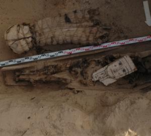 Фото №1 - В Фаюмском оазисе найдены необычные мумии