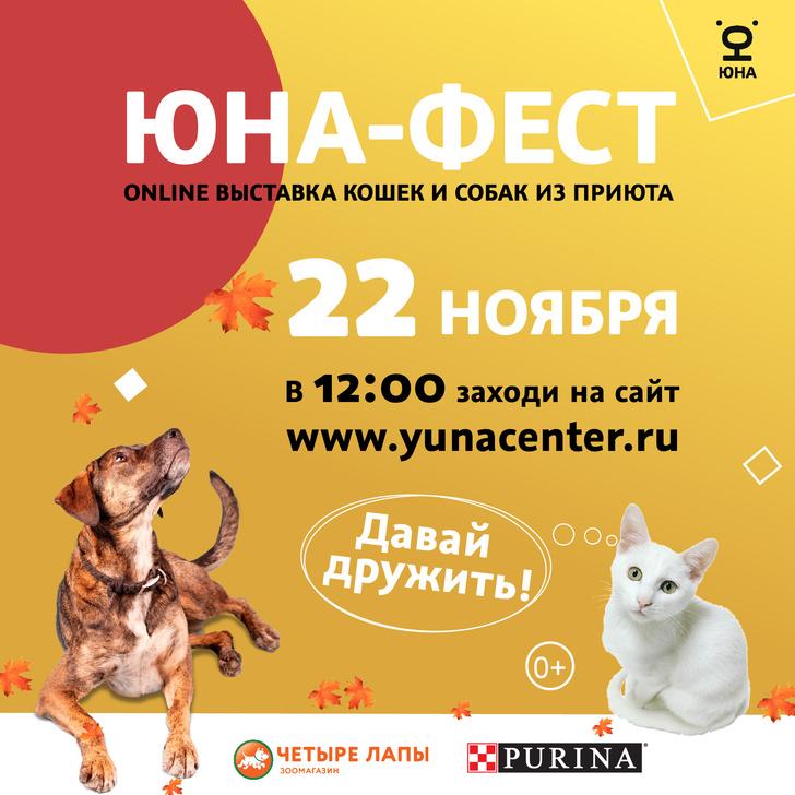 Фото №2 - 22 ноября состоится онлайн-выставка животных из приютов «Юна-фест»
