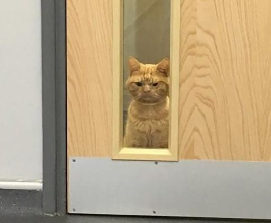 Фото №2 - Grumpy Cat 2.0: нашелся самый суровый кот в Интернете