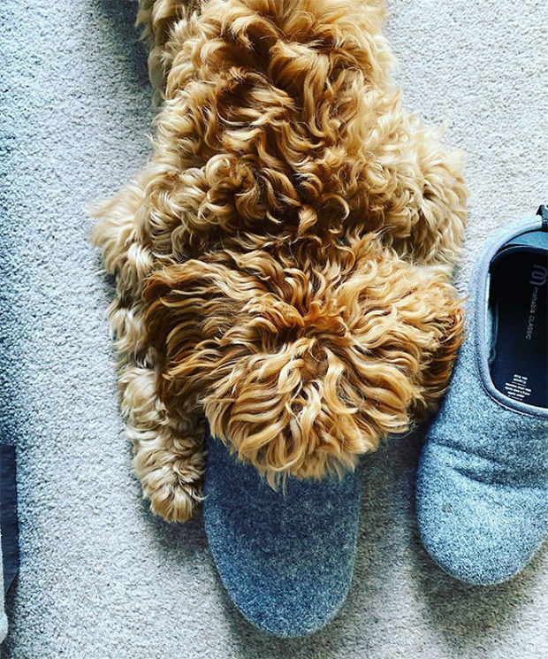Фото №10 - 13 фото собак, притворяющихся утконосами