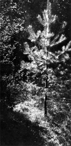 Фото №3 - В Рунских лесах