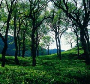 Фото №1 - В Индии ушла под землю 150-метровая гора