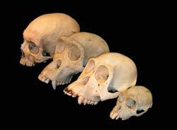 Фото №4 - Три возраста эволюции