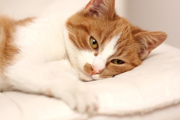 Фото №1 - Составлен список признаков недомогания у кошек