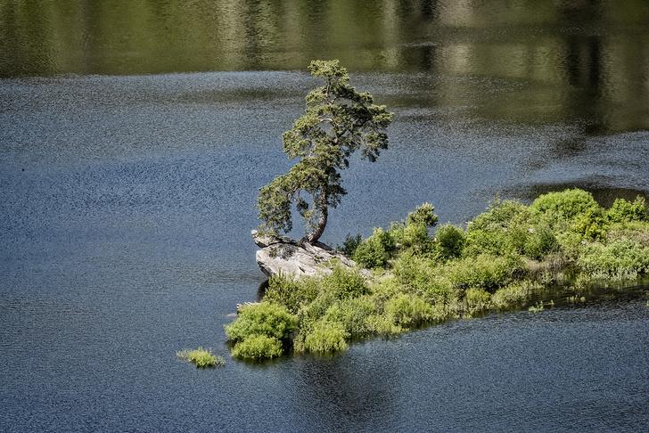 Фото №10 - Деревянные выборы: самые интересные деревья мира
