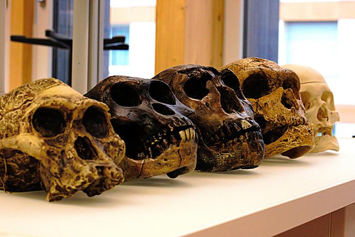 Фото №1 - Названа причина вымирания пяти видов Homo