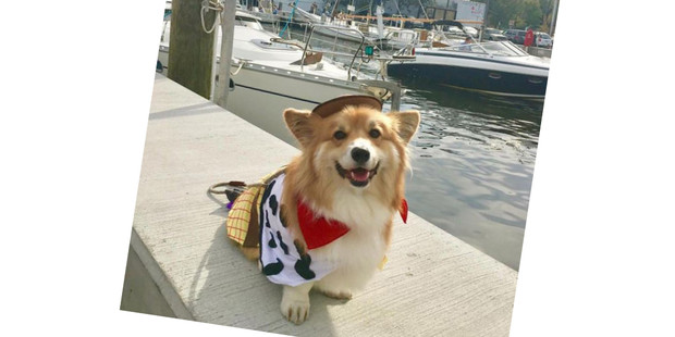 Фото №5 - 20 очаровательных собак в костюмчиках по мотивам мультфильмов Disney