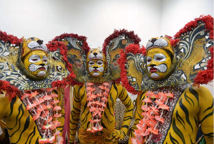 Фото №1 - В тигровой шкуре