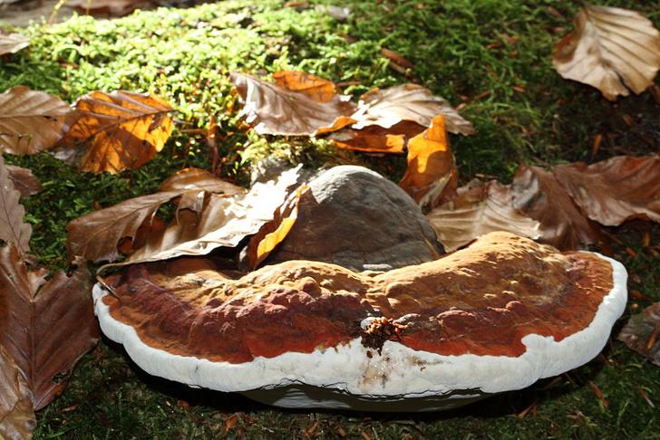 Фото №1 - Обнаружены грибы, которые помогают в лечении рака