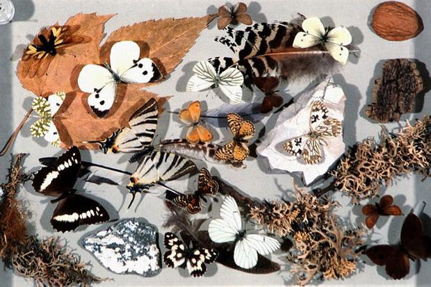 Фото №35 - Путешествие на Лазурный берег: как сказку сделать былью