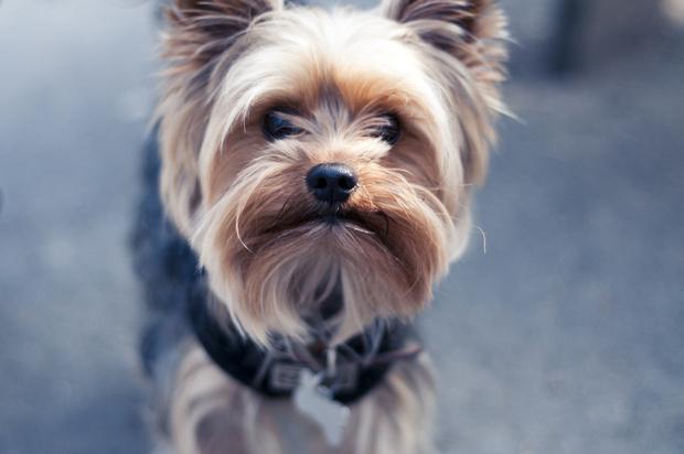 Фото №4 - Холод собачий: 10 пород собак, которые очень мерзнут зимой