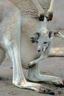 Фото №4 - Австралийские пустынники