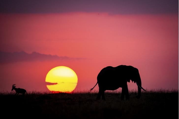 Фото №1 - Африка на закате