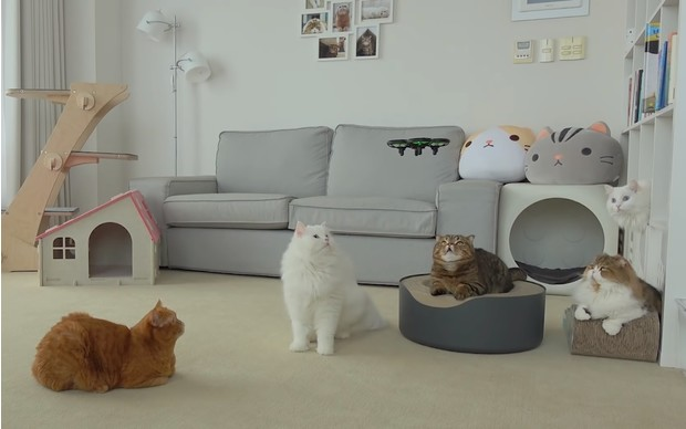 Фото №1 - Коты воюют с дронами (видео)