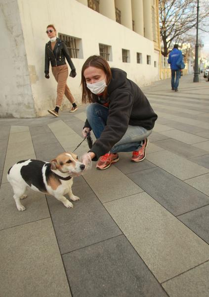 Фото №1 - Ученые обнаружили, что собаки могут определять, болеет ли человек коронавирусом