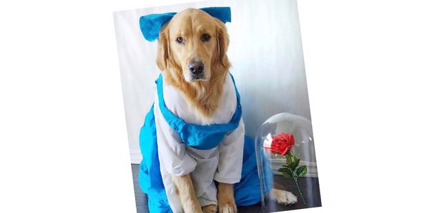 Фото №18 - 20 очаровательных собак в костюмчиках по мотивам мультфильмов Disney