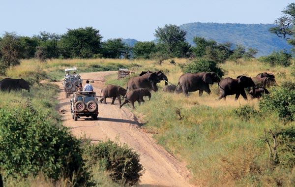 Фото №3 - Жемчужина Танзании