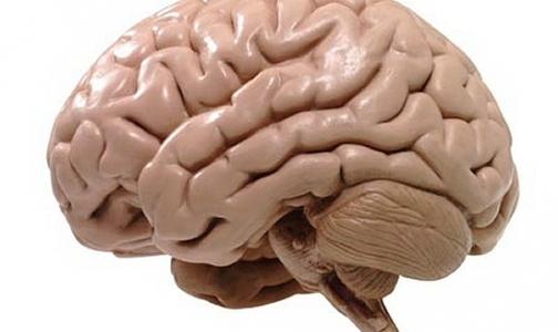 Фото №1 - Обнаружен участок в головном мозге человека, в котором таится зло