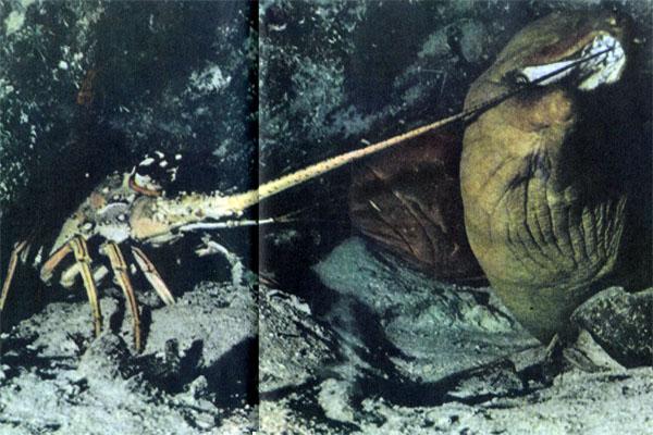 Фото №1 - Подводные марафонцы