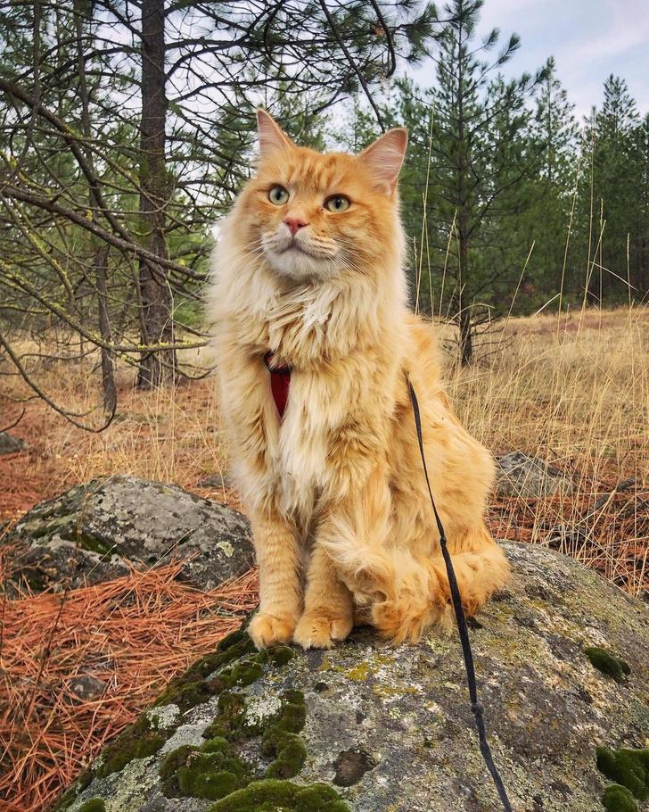 Фото №8 - Замурчательные компаньоны: коты-путешественники
