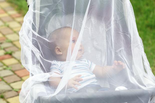 Фото №1 - Как защитить ребенка от комаров и мошек дома и на природе