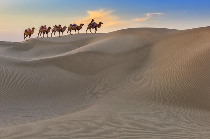 Фото №1 - «Первооткрывателями» Великого шелкового пути могли быть животные
