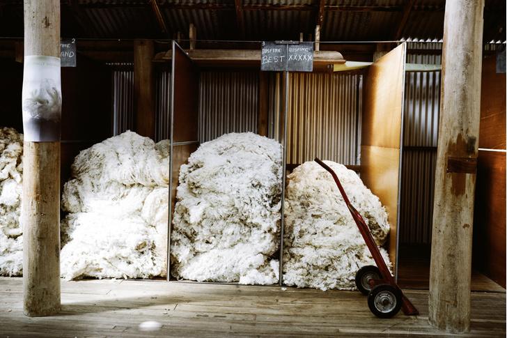 Фото №6 - За черным пнем: жизнь фермеров австралийского аутбэка