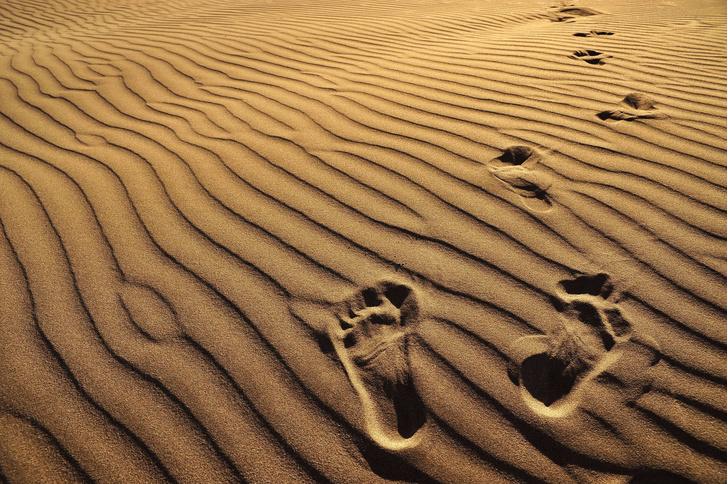 Фото №1 - Когда появилась «человеческая» походка