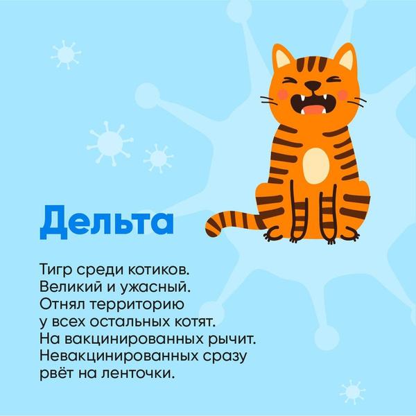 Фото №5 - Биолог Баранова сравнила штаммы коронавируса с милыми котиками: как они выглядят