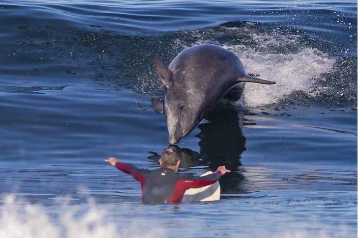 Фото №1 - Серфинг с дельфином
