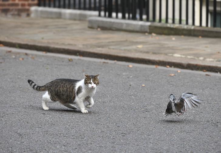 Фото №1 - В Южной Австралии ввели комендантский час для кошек и наказания для их владельцев