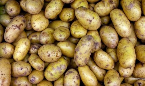 Фото №1 - Эксперт рассказал, стоит ли бояться зеленых пятен на картофеле